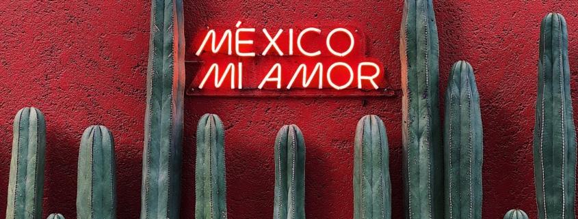mexico mi amor text near cactus